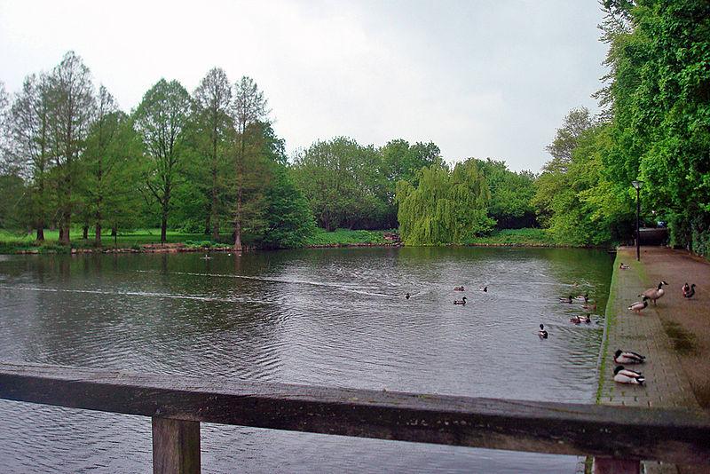 Wasservögel an Ibrüggers Teich