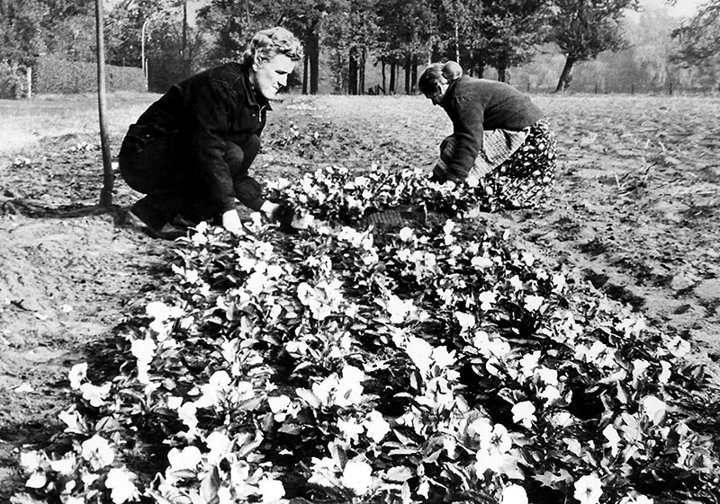 gaertnerinnen-1958