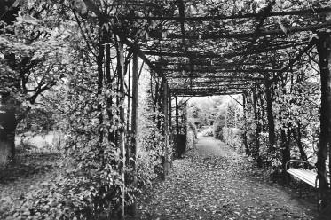 laubengang-1949