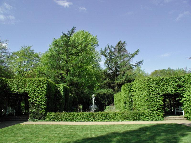 Heckengarten-gruen