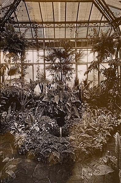 hist-palmenhaus-innen