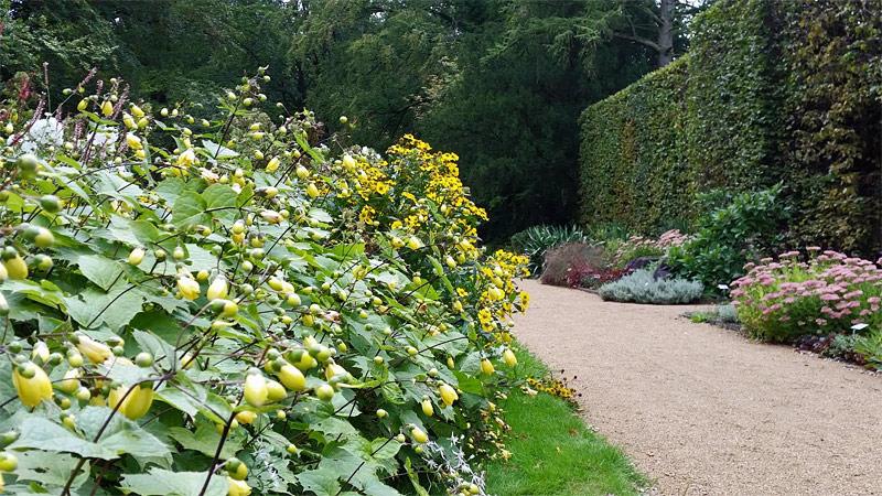wachsglocken-heckengarten