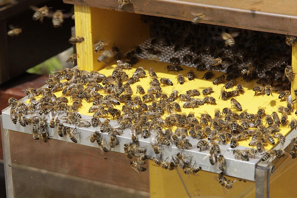 Lehrbienenstand