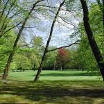Große Wiese im Stadtpark Gütersloh