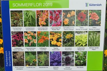Saisonale Beete - Sommerflor 2019