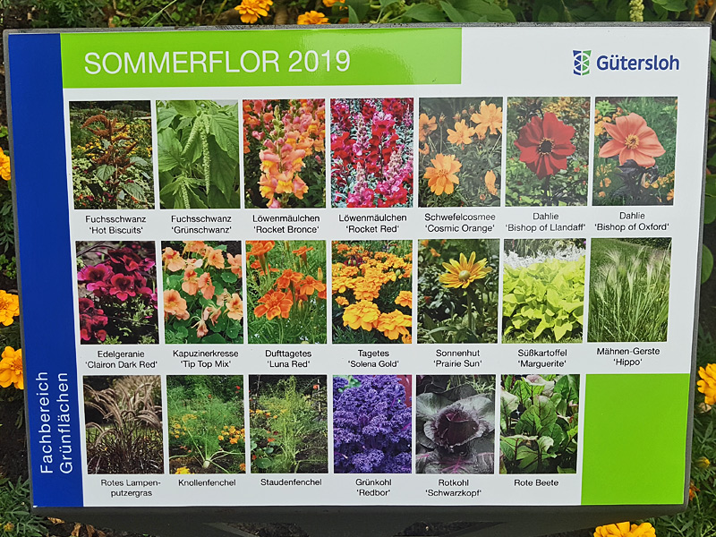 Saisonale Beete - Sommerflor 2019