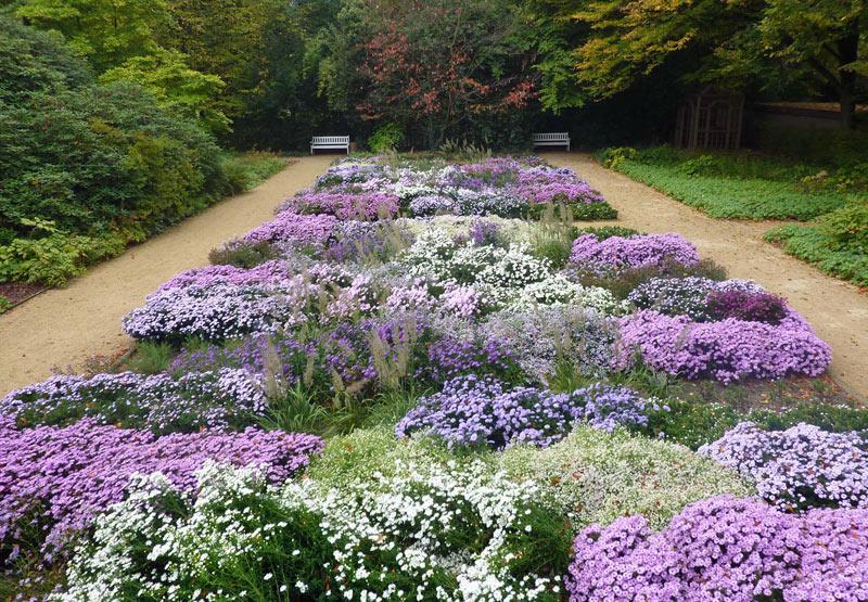 Asterngarten