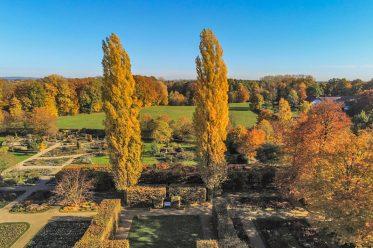 Säulenpappel im Herbst