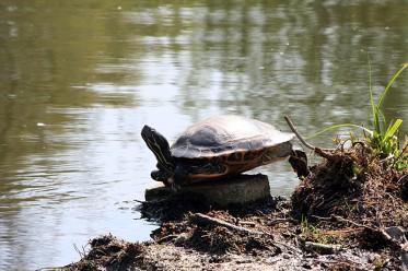 Tiere im Stadtpark Gütersloh - Reptilien