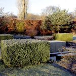 Buchsbaum am Senkgarten
