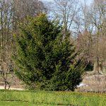 Eibe-Apothekergarten