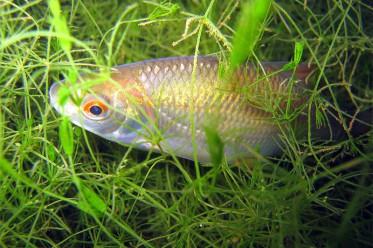 Fische in der Dalke und in Ibrüggers Teich