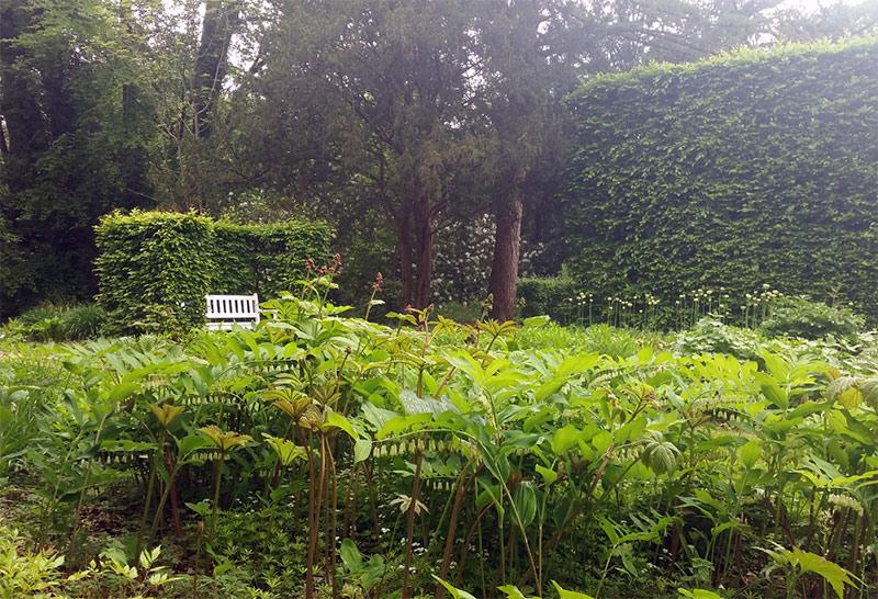 Salomonssiegel im Botanischen Garten Gütersloh