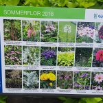 Saisonale Beete Sommerflor 2018
