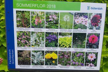 Saisonale Beete Sommerflor 2018