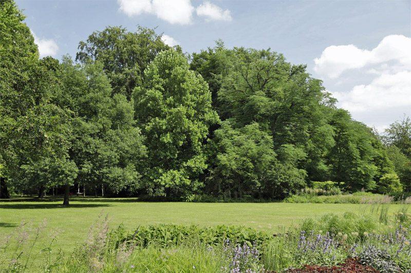 Tulpenbaum an der Wiese im Botanischen Garten Gütersloh